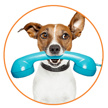 Contact Us at Muddy Paws dog walking and pet sitting to be matched with a great dog walker or pet sitter for your dog or cat's pet care