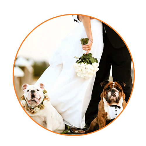wedding concierge petsitting