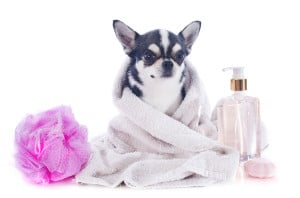 Muddy Paws Mobile Nail Trims in massachusetts