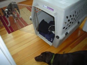 learning how to properly crate train your puppy is essential in keeping your dog safe and secure
