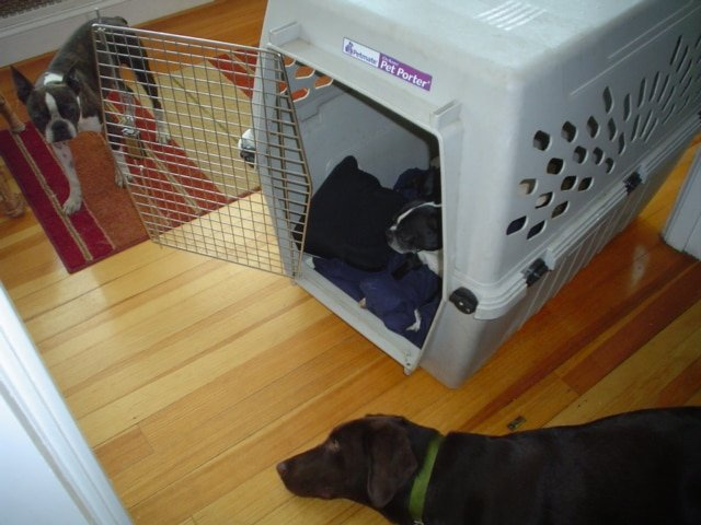 crate train your dog