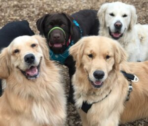 dog socialization is part of dogs' basic needs