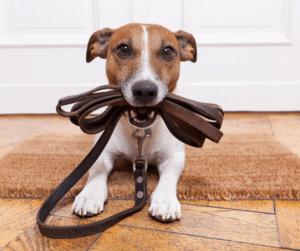 properly leashing a dog