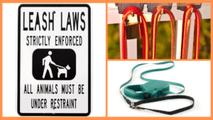 professional recommendations for the best and worst leashes for dogs