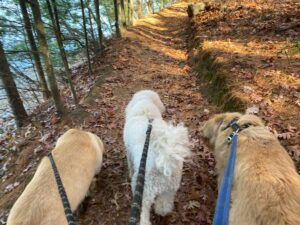 mill pond reservoir, horn pond in woburn, the fells in medford, and whipple hill in lexington are the best places to walk your dog in the woods