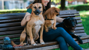 how to find the best dog walker