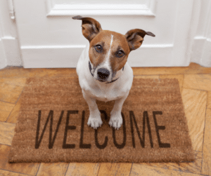 muddy paws is always accepting new clients for dog walking and pet sitting if you live in an our service area. Towns served are woburn, burlington, winchester, lexington, stoneham, arlington, medford, wakefield, melrose, malden, and many other nearby towns