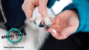 dog paw safety, rock salt dangers for dog paws