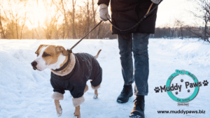 when is it too cold to walk my dog? Learn how to safely walk your dog in cold weather and avoid frostbite and hypothermia and navigate rock salt and ice melt safely this winter