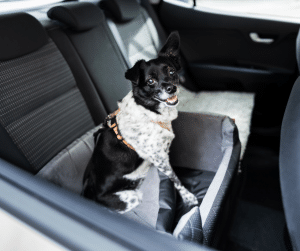 dog care safety is important to keeping your dog safe in the car and it can be done by containing your dog in a dog seatbelt, using a dog car barrier, or using a dog car seat
