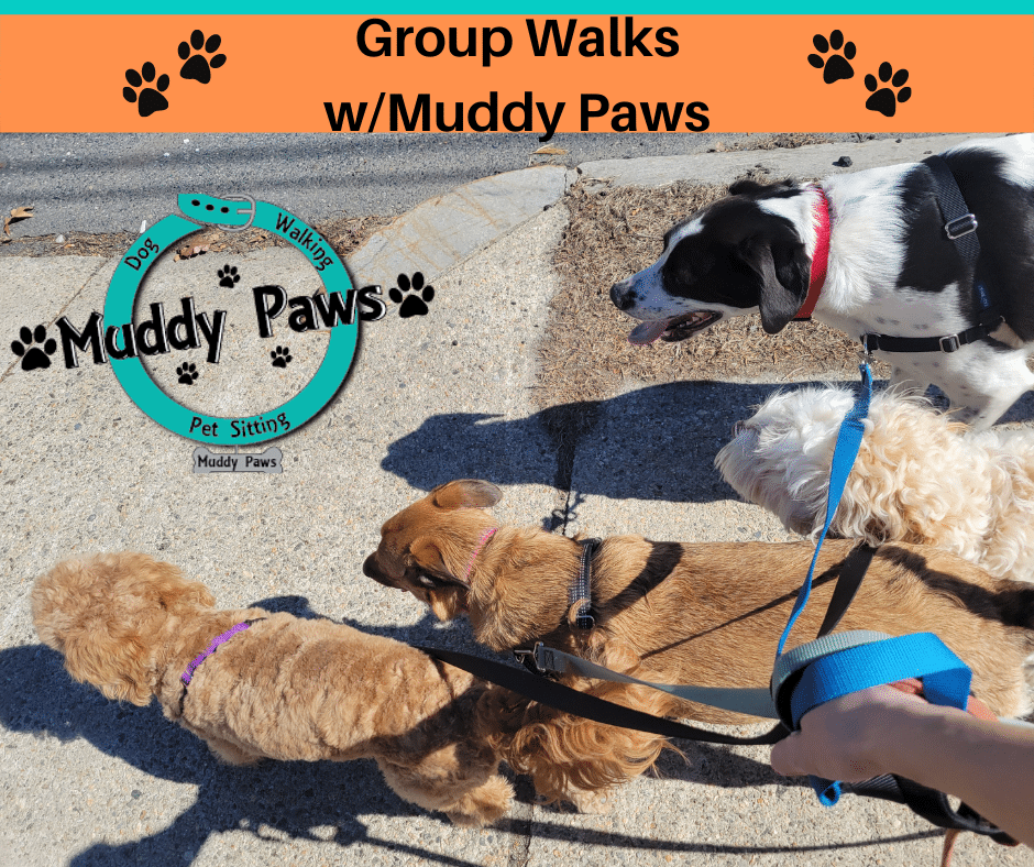 muddy paws dog walking services include quick relief visits, 30 minute walks, 60 minute dog walks, and group outings that consist of 90 minute walks and doggie play time.  We specialize in group dog walks to socialize your dog
