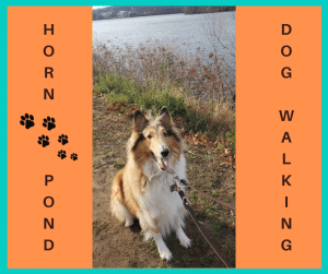 dog walking at horn pond is the best experience for dog handlers, dog owners, and dogs who like to walk in nature